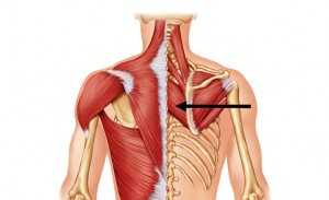 neck and shoulder pain ease it out with rhomboid muscle workout
